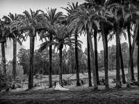 Foto - IMG_4278-Editar-Editar